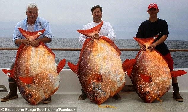 أسماك اوبا opah