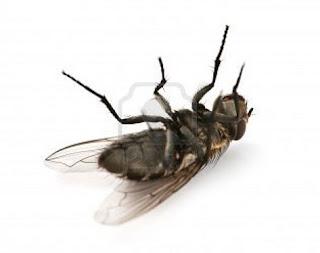 Cr nicas de la muerte dulce cr nicas de la muerte dulce - Como matar las moscas de mi casa ...