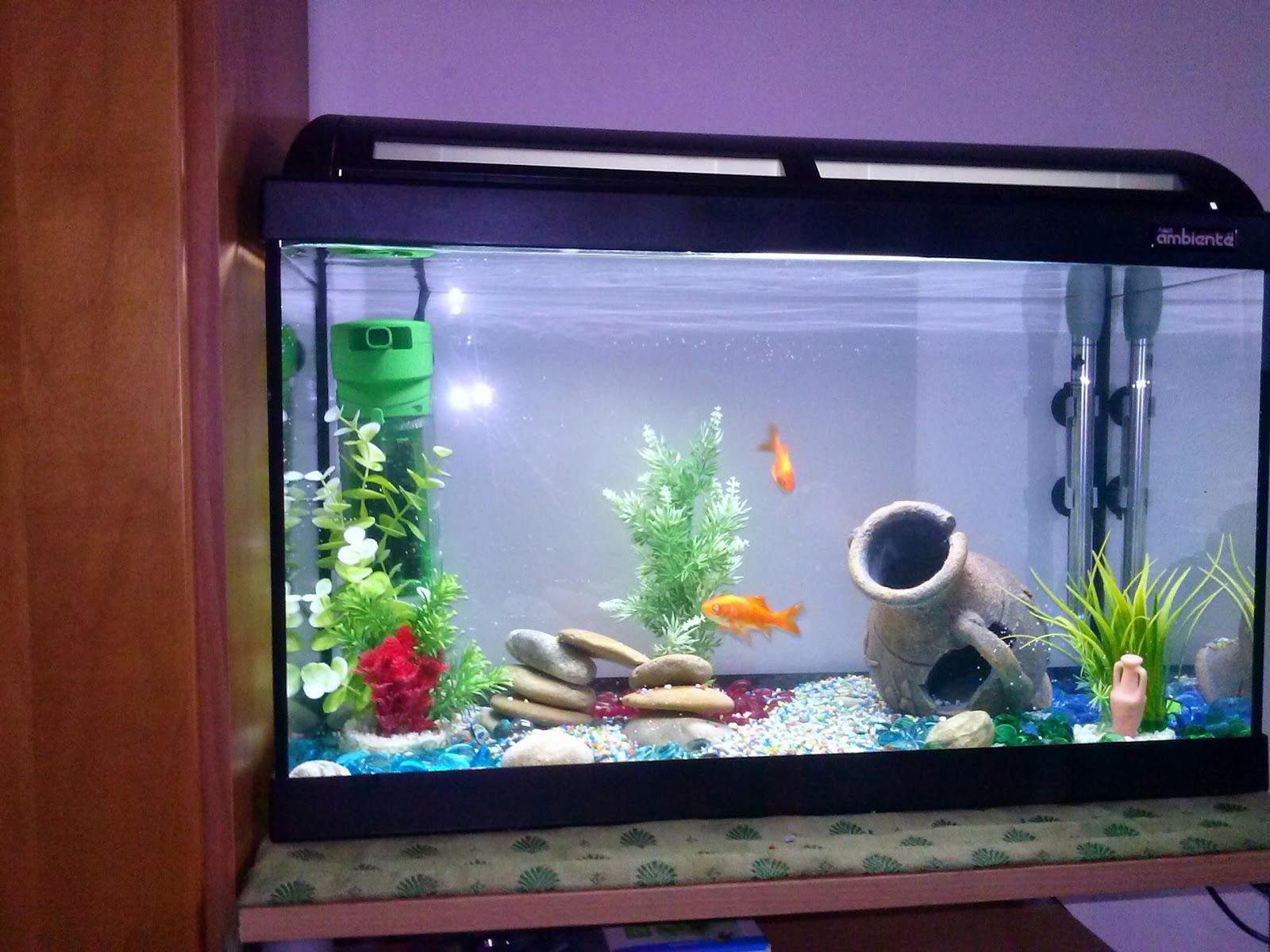 Barabao come allestire un acquario per pesci rossi for Acquario per pesci rossi usato