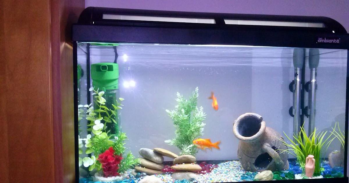 Barabao come allestire un acquario per pesci rossi for Ossigenatore acquario pesci rossi