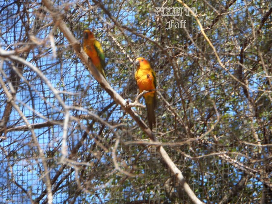 Cameron Park Zoo Sun Conures