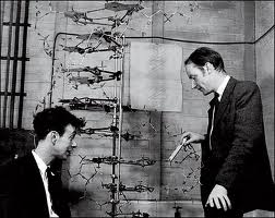 commentary on watson and crick dna When watson and crick communicated the dna structure paper to nature in 1953, it was not peer reviewed but the policy of nature that time was to peer review the submitted manuscripts.