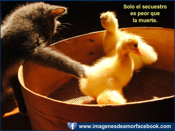 Imagenes de Amor Para Facebook NUEVAS - YouTube