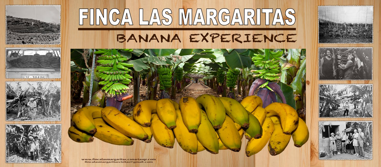 .FINCA LAS MARGARITAS, Banana Experience