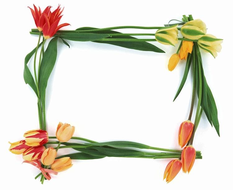 Tulipanes para decorar fotografias