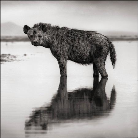 иена в воде,Nick Brandt