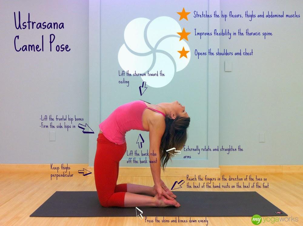 Camel pose (ultrasana), yoga for beginners blog