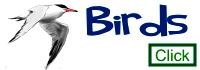Artmagenta Birds