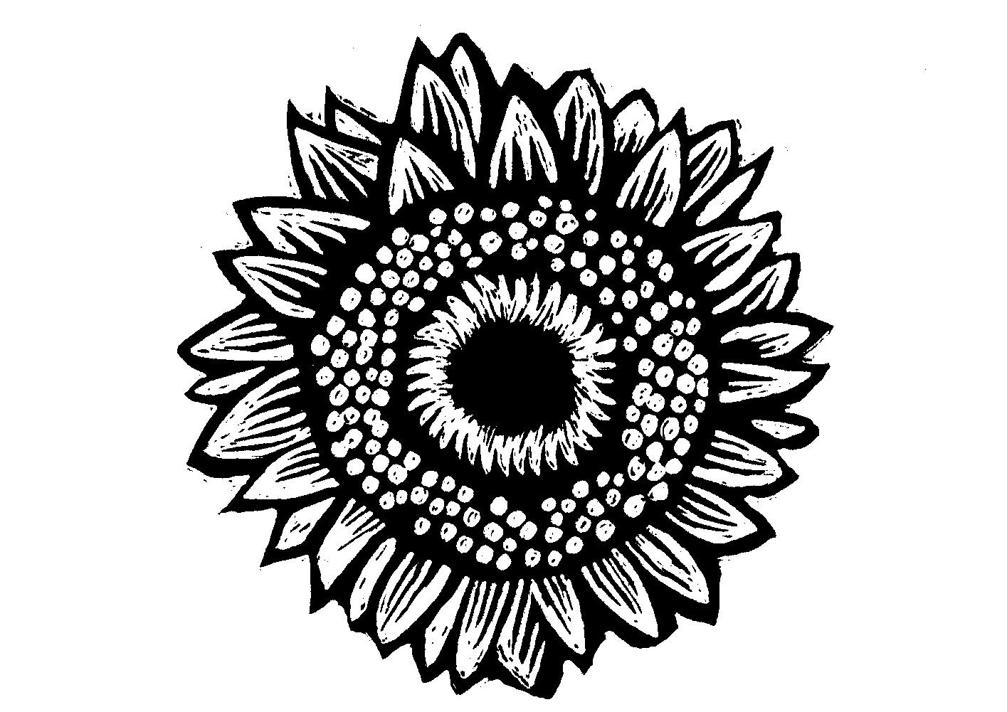 Claudias Illustration Blog Sun Flowers