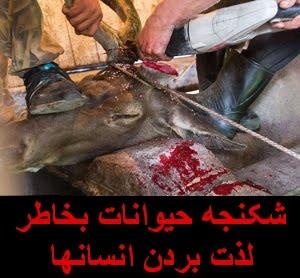 شکنجه حیوانات بخاطر لذت بردن انسانها