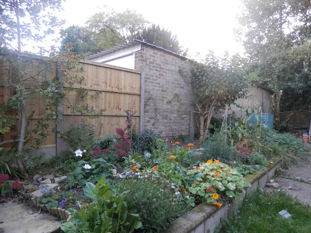 Garden, October 2015, Autumn Gardening.  secondhandsusie.blogspot.co.uk