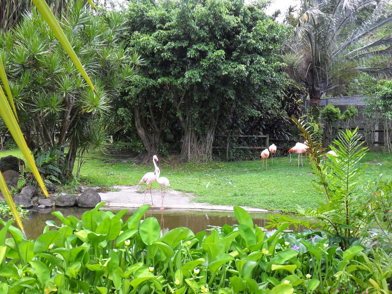 Flamant Roses au Jardin Botanique de Deshaies