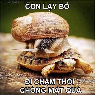 hình ảnh vui nhộn hài hước nhất con rùa