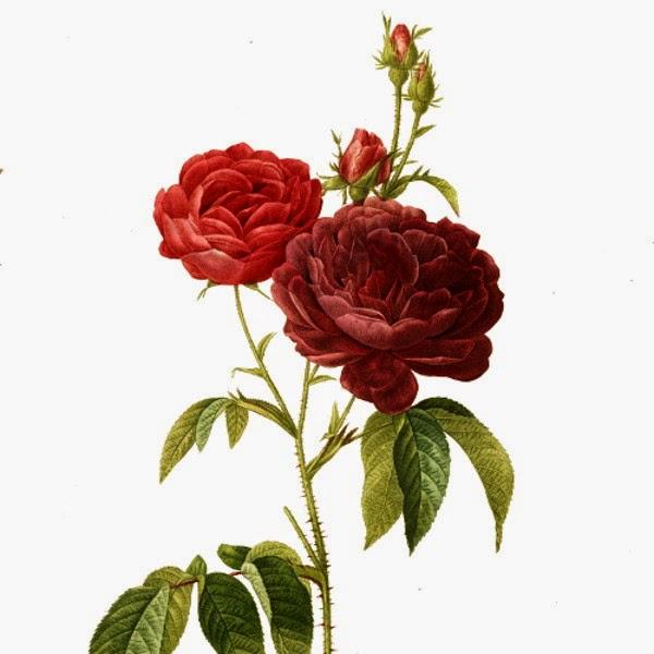 simbol mawar, mawar sufi