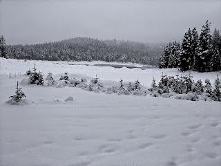Black & White Winter