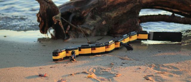 Salamandra Robotica
