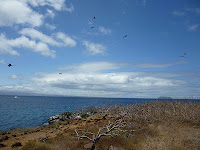 Pelagic Birds Swarming above North Seymour