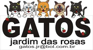Clique e adote um gatinho do RJ =^.^=