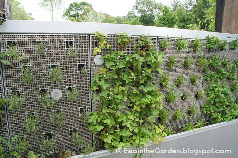 Ewa in the garden vegetable vertical garden do you for Vertical vegetable garden