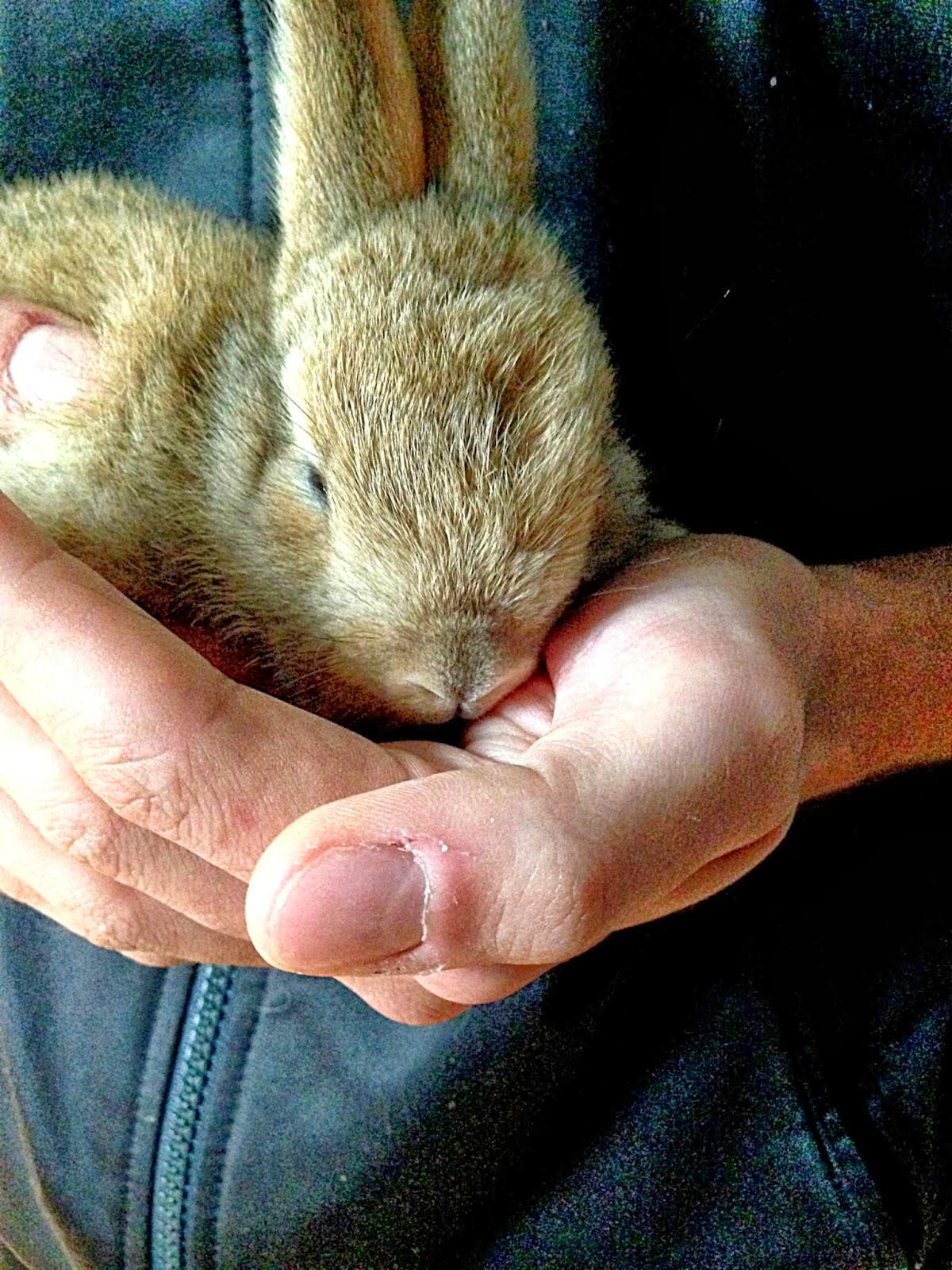D 39 inventati recuperati un coniglio non fa pasqua - Foglio colore coniglietto pasquale ...