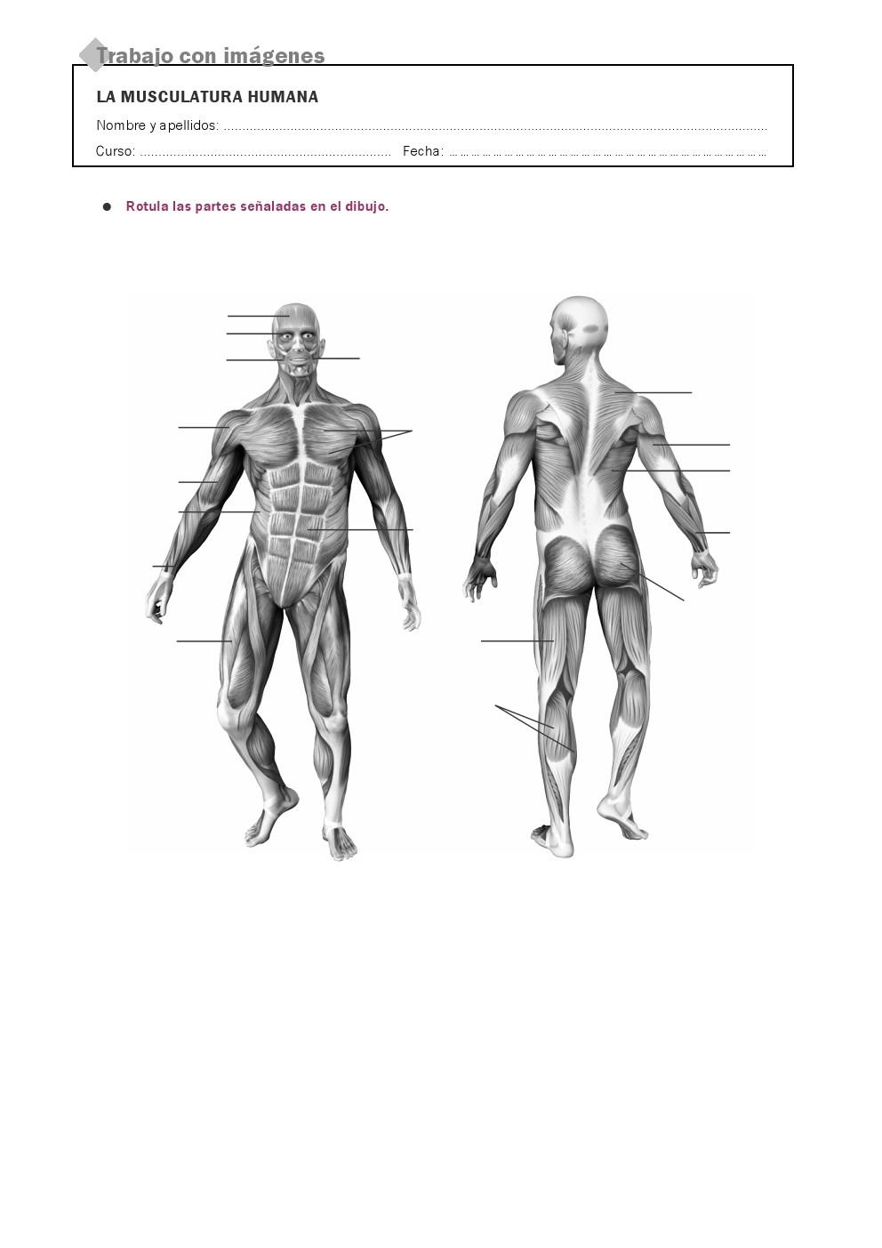 RECURSOS PRIMARIA | Láminas mudas del cuerpo humano ~ La Eduteca