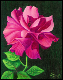 Pink rose original artwork - color pencil drawing