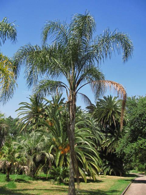 Fiori piante e giardini del mondo palme come curarle for Piante e giardini