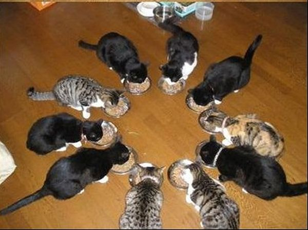 Having fun with cats, cats feeding time, feeding cats