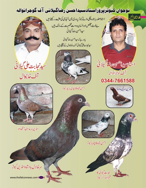 K Magazine Pigeon August Pigeons Magazine