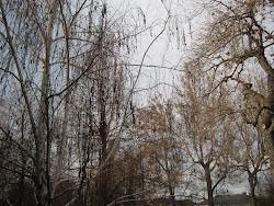 Wild Bare Branches
