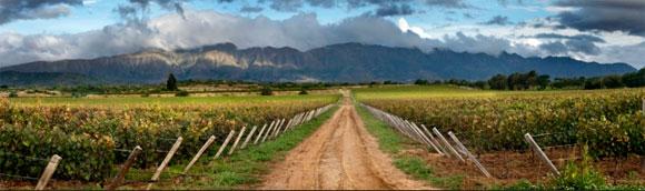 El singani se produce sólo en Bolivia pero no fue registrado como bebida boliviana
