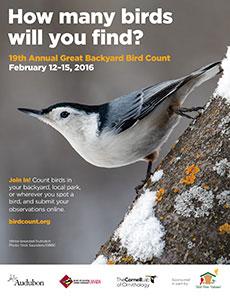 GREAT BACKYARD BIRD COUNT 2016