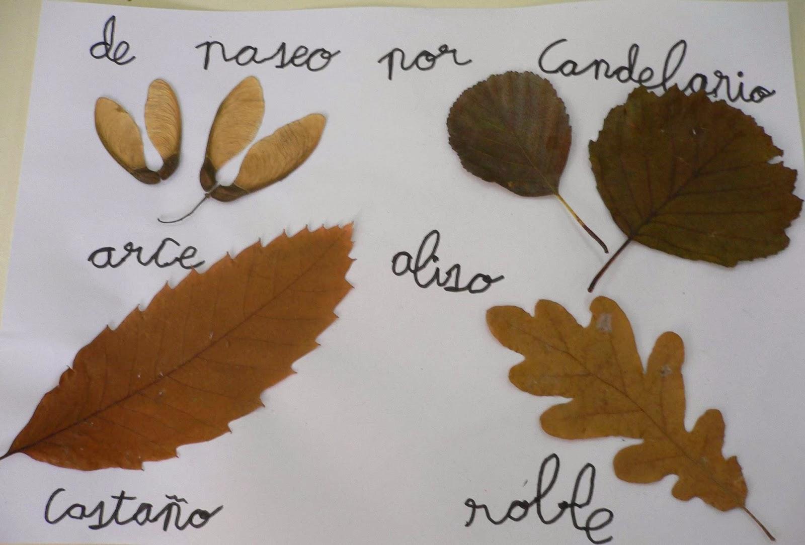 Nombres de hojas de arboles imagui for Arboles con sus nombres y caracteristicas