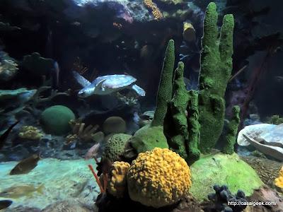 Oceanário de Lisboa - Tartarugas Marinhas: A Viagem