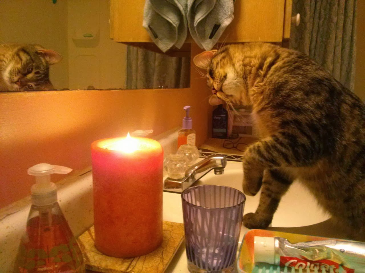 Funny cats - part 87 (40 pics + 10 gifs), cat fascinates by fire on candle