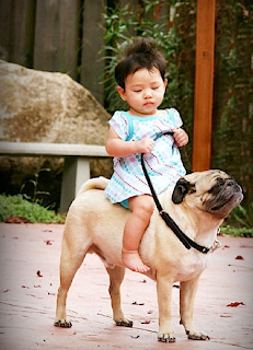 funny picture: child with dog