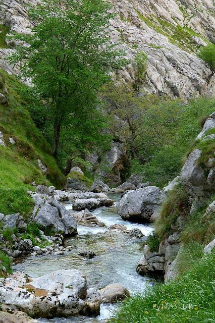 Río Texu llegando al Cares
