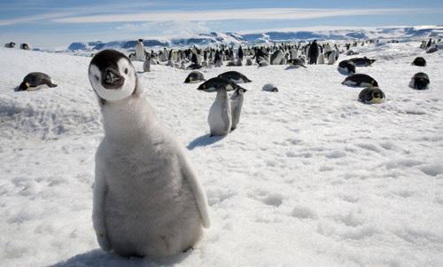 Antarctica Windows 7 Theme