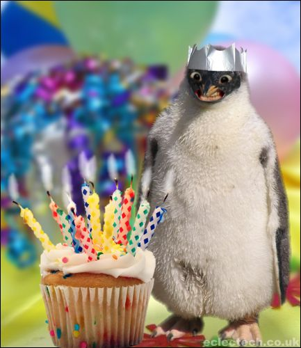 happy birthday animal funny - photo #35