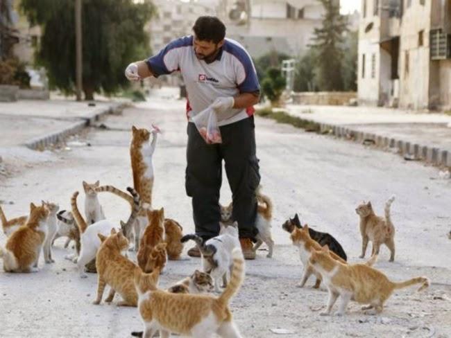 Tindakan Lelaki Ini Beri Makan 150 Ekor Kucing Di Kawasan Perang Tersebar Di Internet 7 Gambar