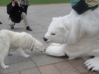 Image of a dog sniffing the polar bear mascot