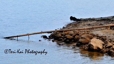 A log at the edge of a lake