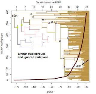haplogroup tree