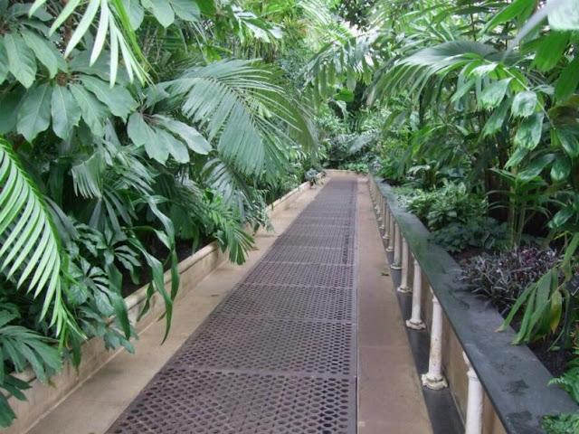 Inside the Palm House, Kew Gardens London