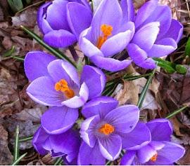 Fragancia de violetas