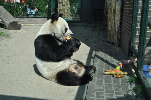 Bao Bao Berlin Zoo