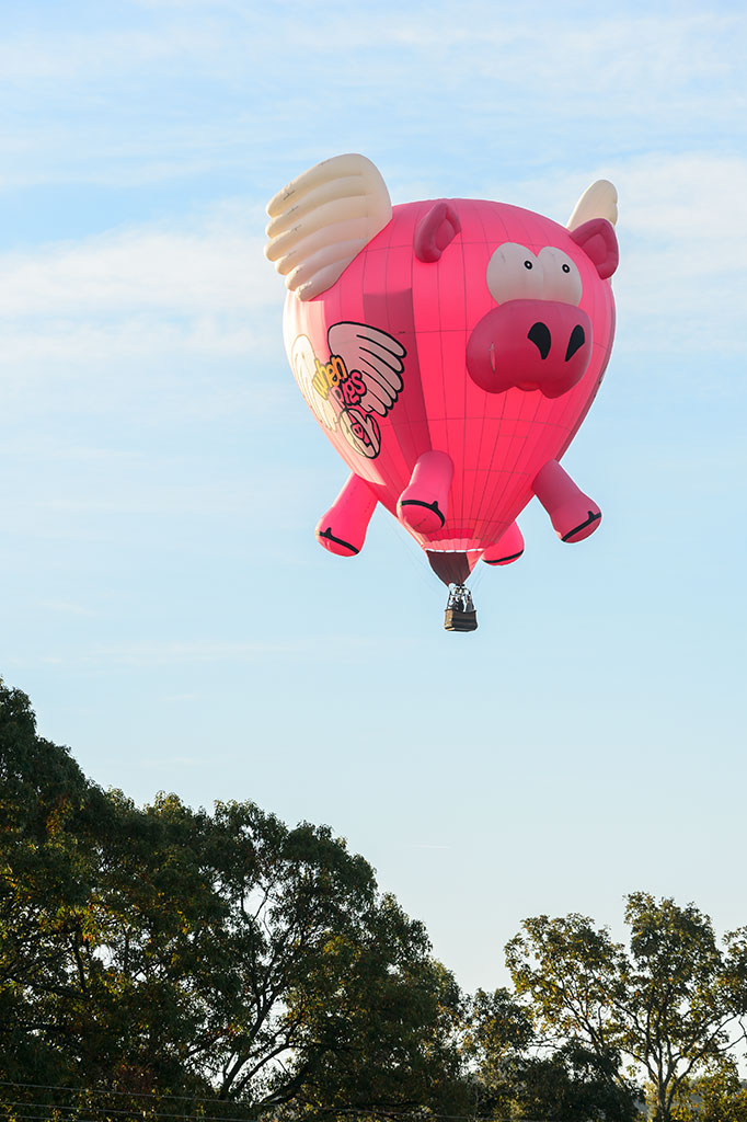 Doug Gantt flying Ham-let (When Pigs Fly)