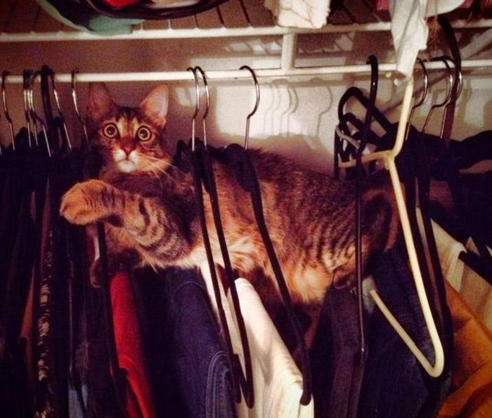 Funny cats - part 91 (40 pics + 10 gifs), cat stuck in clothes hangers