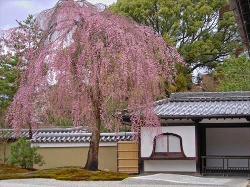 京都市東山区|高台寺