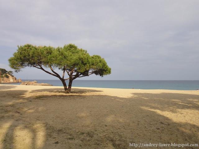 arbre au bord de la mer